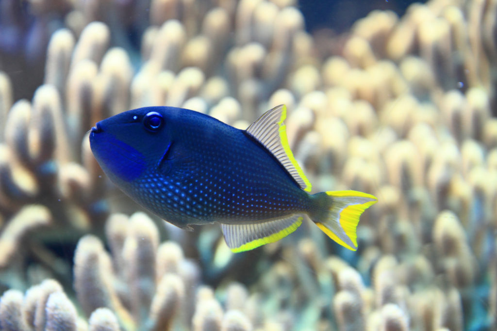 exotic fish in the sea with coral background